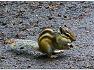 다람쥐 - 대구수목원