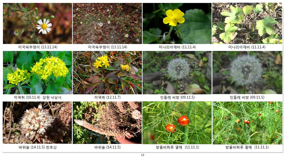 가을에 피는 야생화(14-11월- 4)