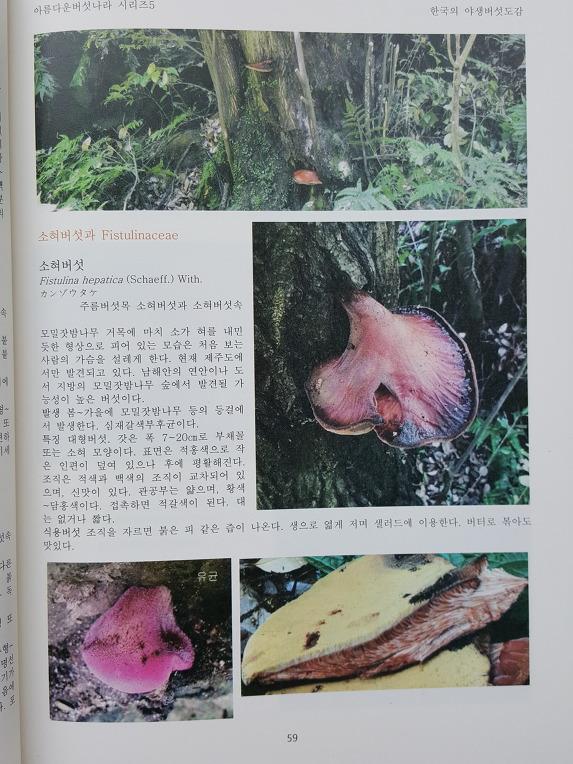 한국의 야생버섯도감 출간 기념 할인 판매 (마감)