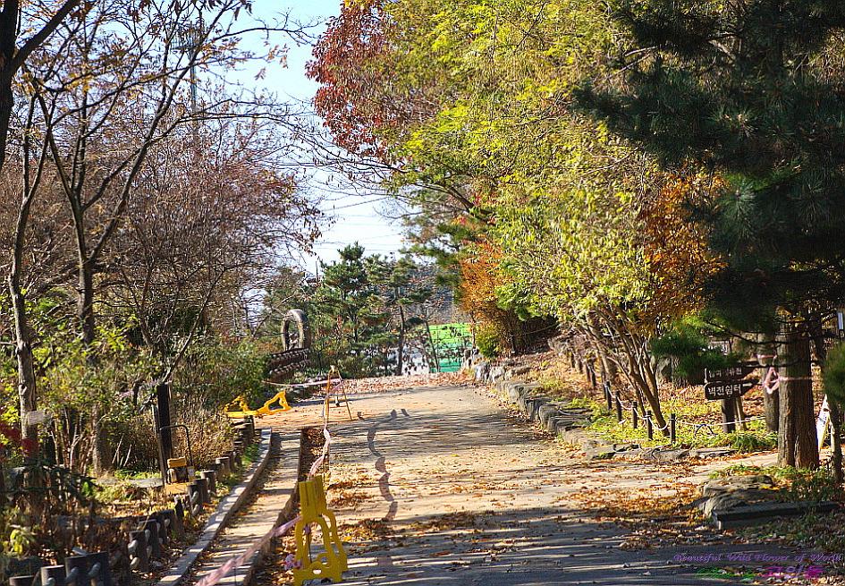 가을의 수목원 풍경